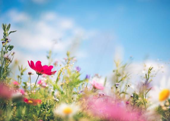 цветочный арома сувенир, ароматизируем любые подарки из войлока на заказ оптом