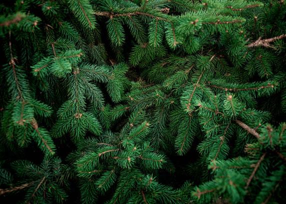 хвойный лес арома сувенир, ароматизируем любые подарки из войлока на заказ оптом